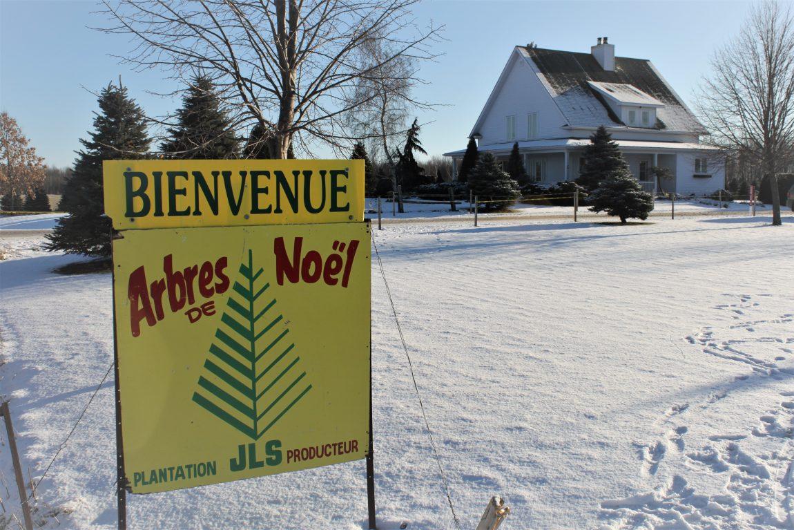 Activité d'autocueuillette d'arbres de Noel en Montérégie